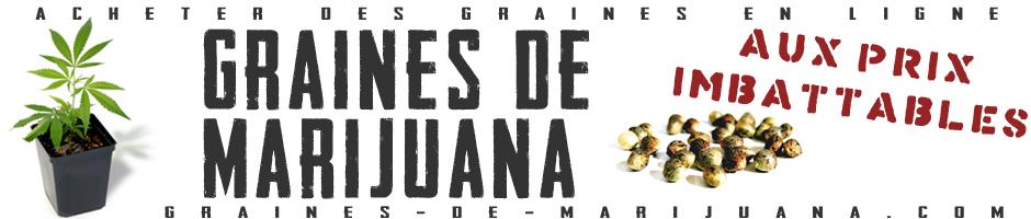 Graines de Marijuana
