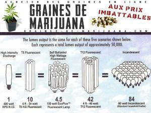 HPS-HID-cannabis