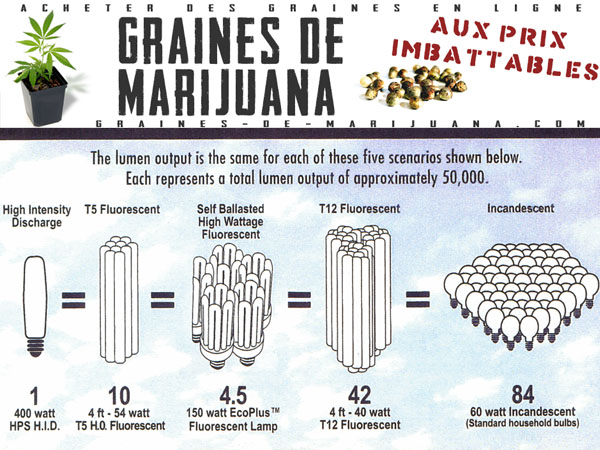 Quelques liens utiles for Graine de cannabis interieur