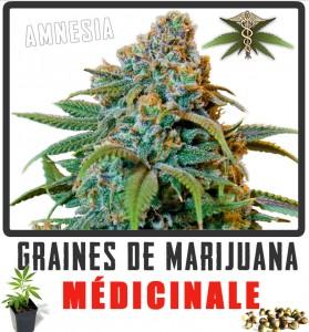 cannabis médicinal