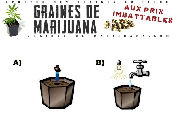 Faire germer les graines de cannabis directement dans le terreau