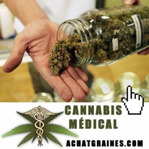 Le meilleur cannabis médical