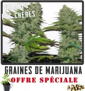 graines de marijuana pas chères!