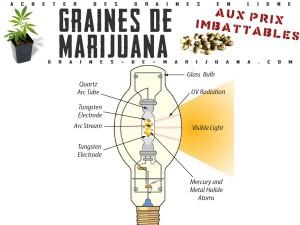 lampe HID pour pousser du cannabis