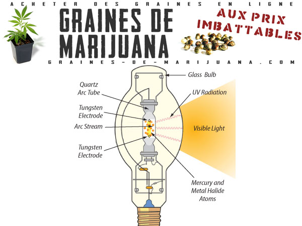 guides de culture du cannabis graines de marijuana page 2. Black Bedroom Furniture Sets. Home Design Ideas