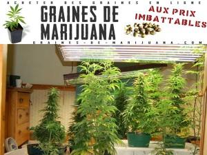 Marijuana à l'intérieur