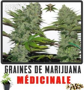 marijuana médicinale