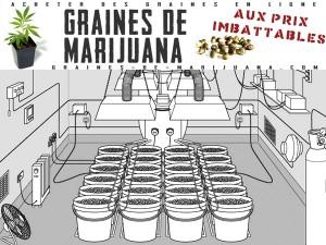 systeme-hydroponique-marijuana